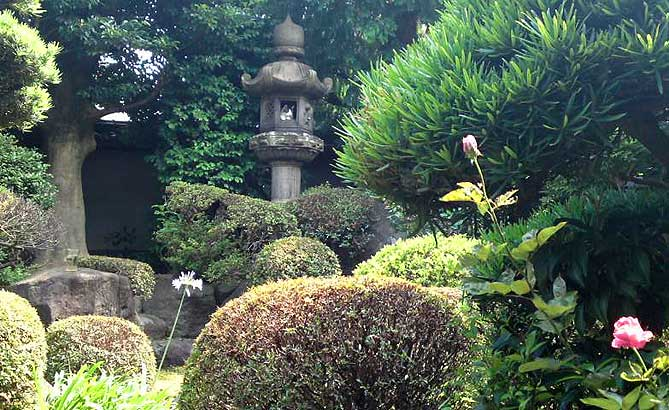 Japanese garden with cat in lantern